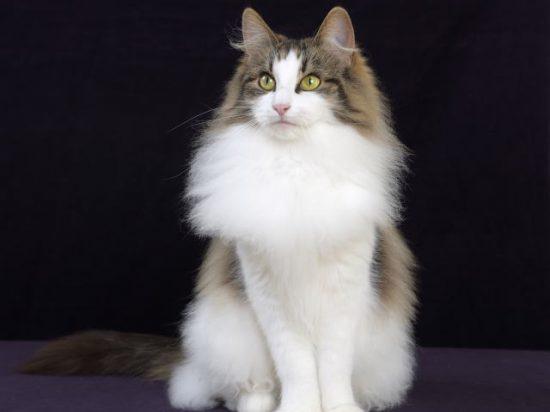 🐈猫と暮らす🐈のアイキャッチ画像